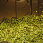 Mash tun hopback for Trip Hop (Garage Project, 6 July 2012)